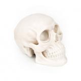 Silikonová lebka na cvičení - Silicone skull (K)